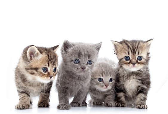 4 kittens.jpg