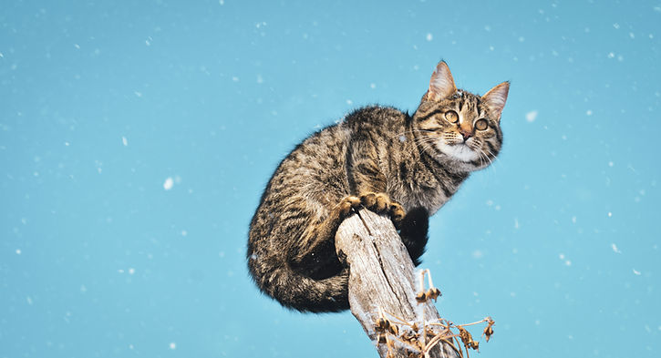 photo-of-tabby-cat-1818608.jpg