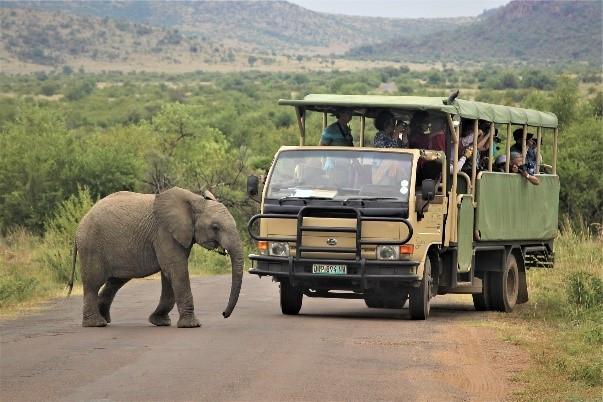 viajes de safari