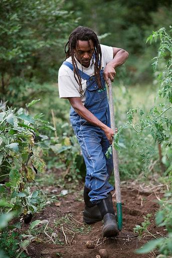 digging potatoes 2 (1).JPG
