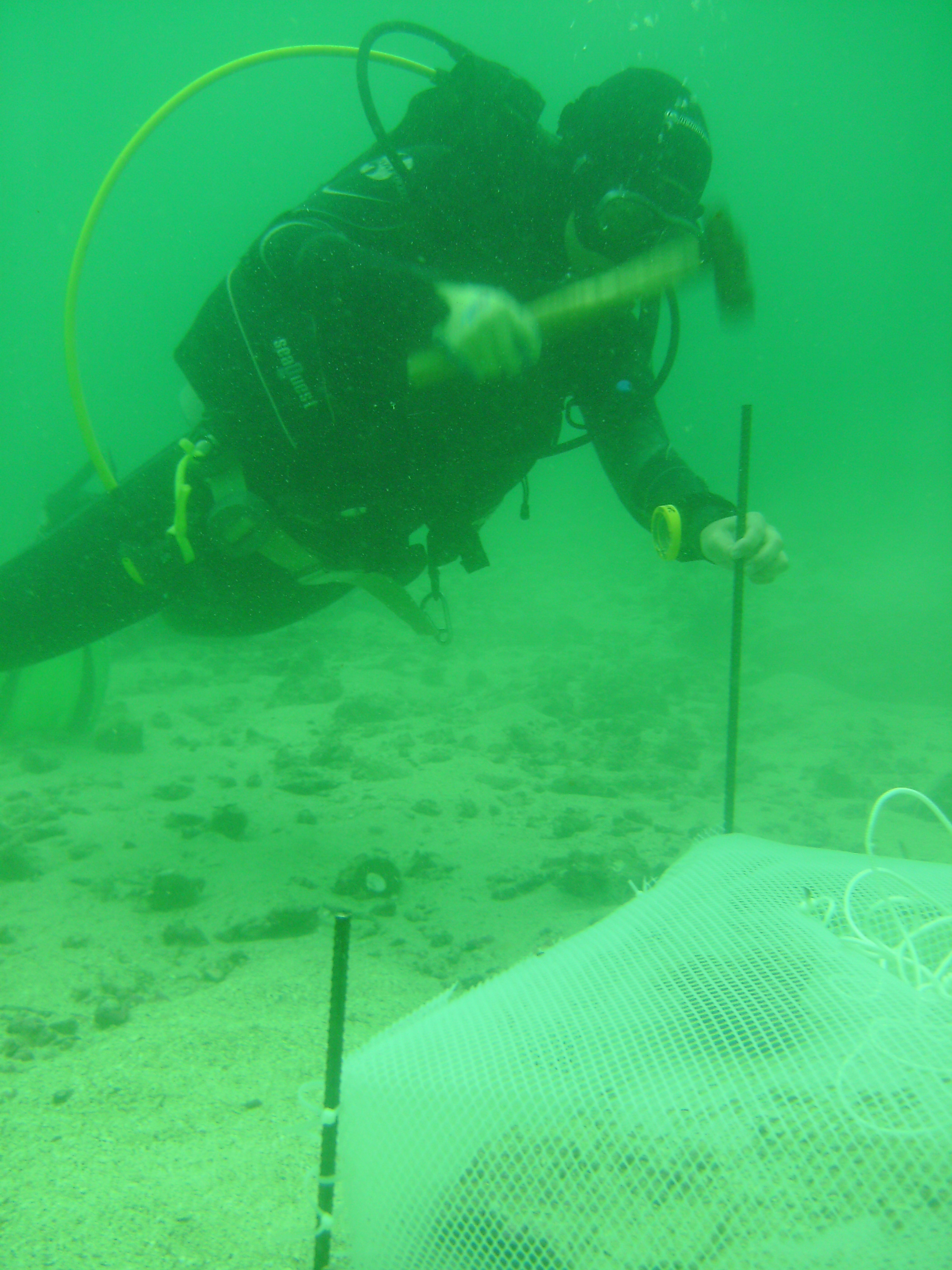 setting up underwater cages