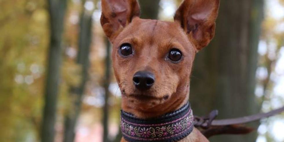 無料オンラインディスカッション 動物福祉から考える犬の健康