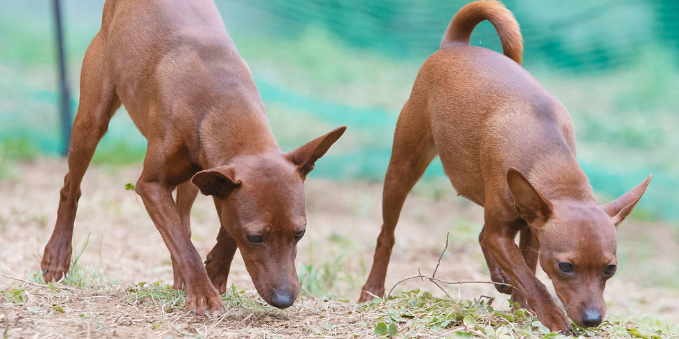 無料オンラインイベント:犬の食事と動物福祉