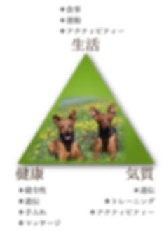 gazou1(1)のコピー.jpg