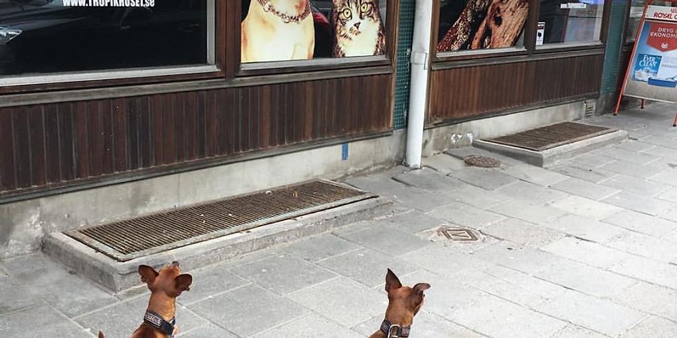 無料オンラインディスカッションイベント 犬の気質と動物福祉