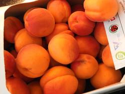 Les bons abricots du village
