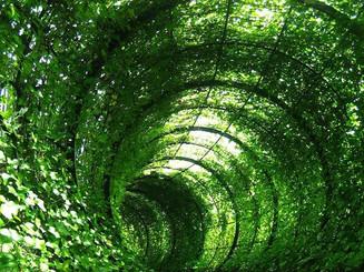 Green archway 2.jpg