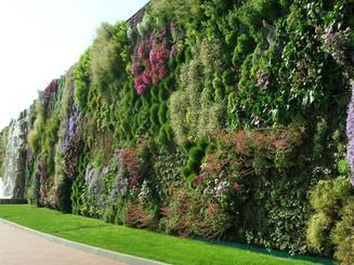 Huge green wall.jpeg