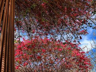 small scale vertical garden tree 3.jpg