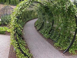 Green archway 3.jpg