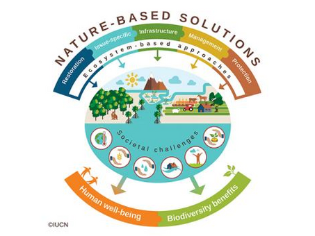 Nature: One of the most effective ways of tackling climate change