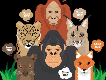 Endangered Animals around the World