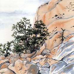 joshua tree - pinyon pines - 2014-02-10 at 13-31-05.jpg