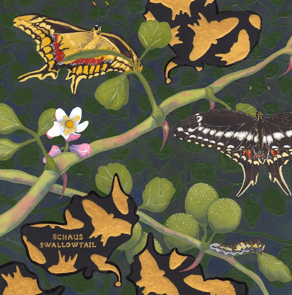 extinct - schaus swallowtail - 2015-06-15 at 13-55-59.jpg