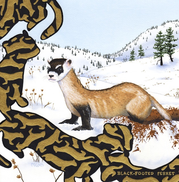 extinct - black-footed ferret - 2015-01-17 at 13-38-00 - Version 2.jpg