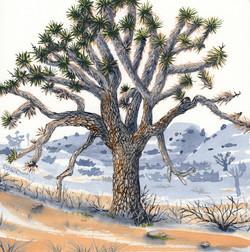 joshua tree - elder joshua tree - 2014-02-10 at 13-23-35.jpg