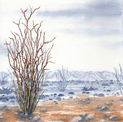 joshua tree - octotillo plant  - 2014-02-10 at 13-47-05.jpg