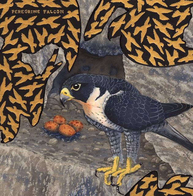extinct - peregrine falcon - 2015-01-29 at 13-01-03.jpg