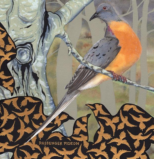 extinct - passenger pigeon - 2015-02-13 at 13-03-37.jpg