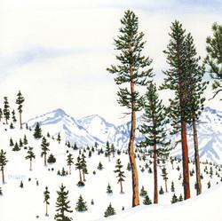 ponderosa pine 17 - Version 2.jpg