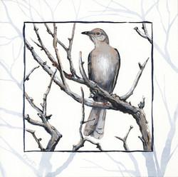 joshua tree - desert mockingbird - 2014-01-22 at 11-01-13.jpg