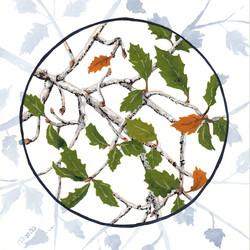 joshua tree - turbinella oak leaves - 2014-01-22 at 10-47-03.jpg