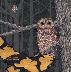 extinct - northern spotted owl - 2015-12-12 at 11-11-32.jpg