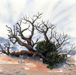 joshua tree - Juniper tree - 2014-02-10 at 13-37-28.jpg