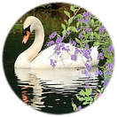 Round Swan.png