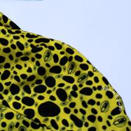 IMG_7712-rectifié-carré-jaune-rectif.png