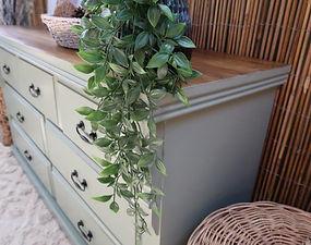 Olive 1.jpg