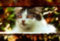 chatte_liubo 2.jpg