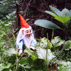 kaboutertje in het bos - little gnome in the forest