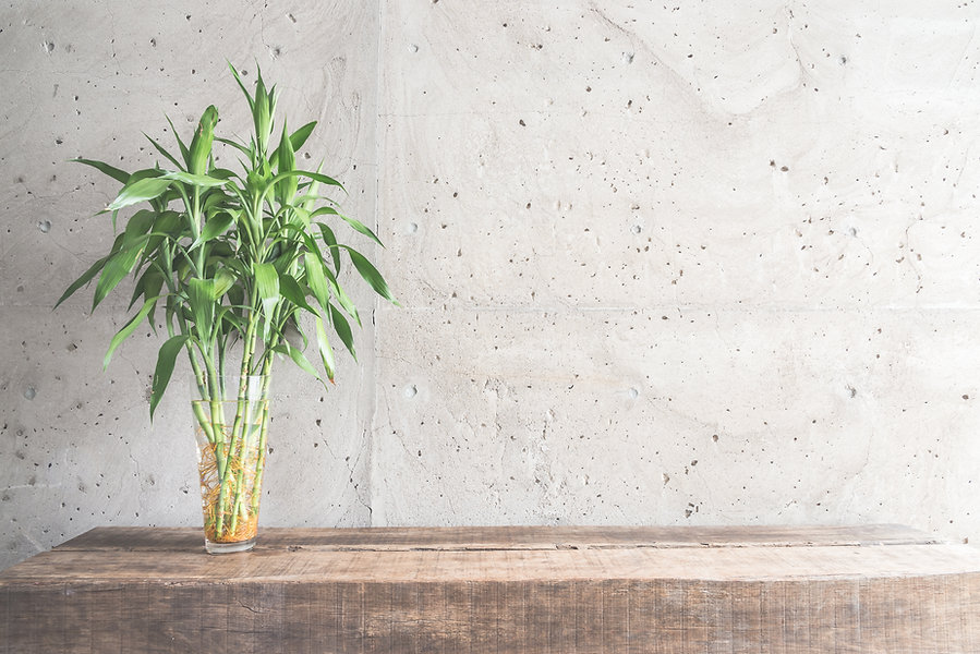 bright-bamboo-lifestyle-clean-plant.jpg