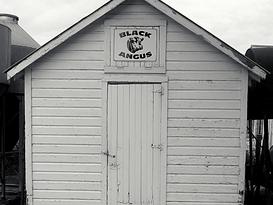 Pat Kirk Angus - Iowa Angus Breeder - Angus Calves for Sale in Iowa 5.png