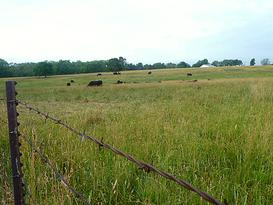 Pat Kirk Angus - Iowa Angus Breeder - Angus Calves for Sale in Iowa 35.png