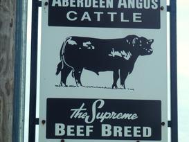 Pat Kirk Angus - Iowa Angus Breeder - Angus Calves for Sale in Iowa 1.png