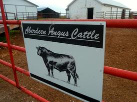 Pat Kirk Angus - Iowa Angus Breeder - Angus Calves for Sale in Iowa 26.png