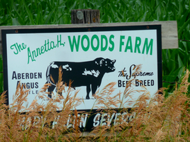 Pat Kirk Angus - Iowa Angus Breeder - Angus Calves for Sale in Iowa 38.png