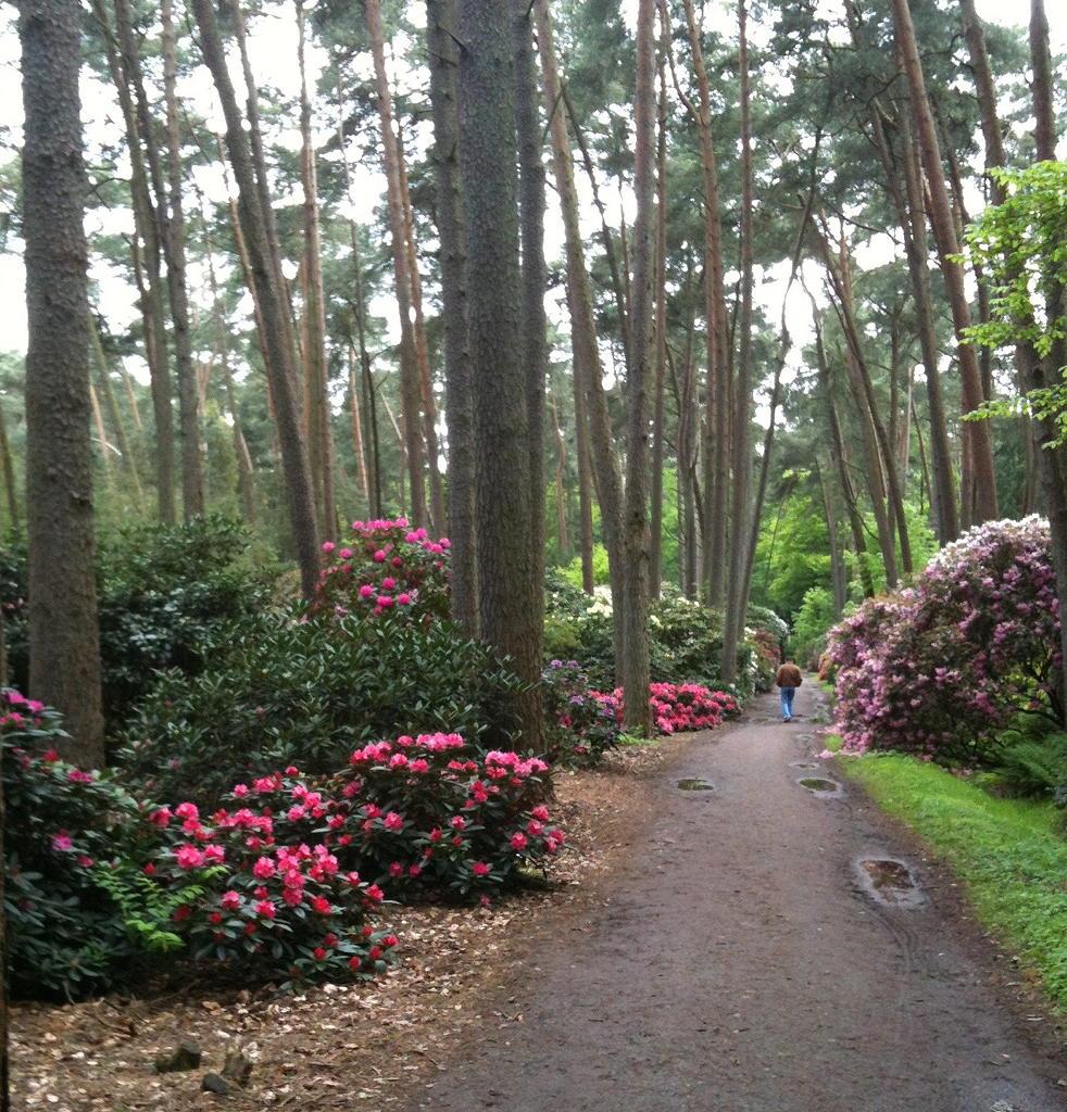 Rhododendrenpark Bruns