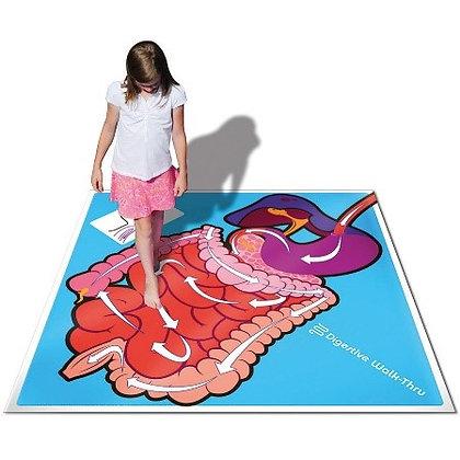"""Digestive System Walk-Thru 70"""" x 70"""""""