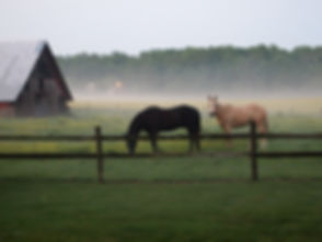 Horse Country Hobby Farm.jpg