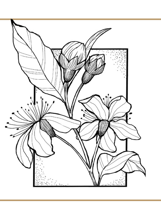 bloem flash.jpg