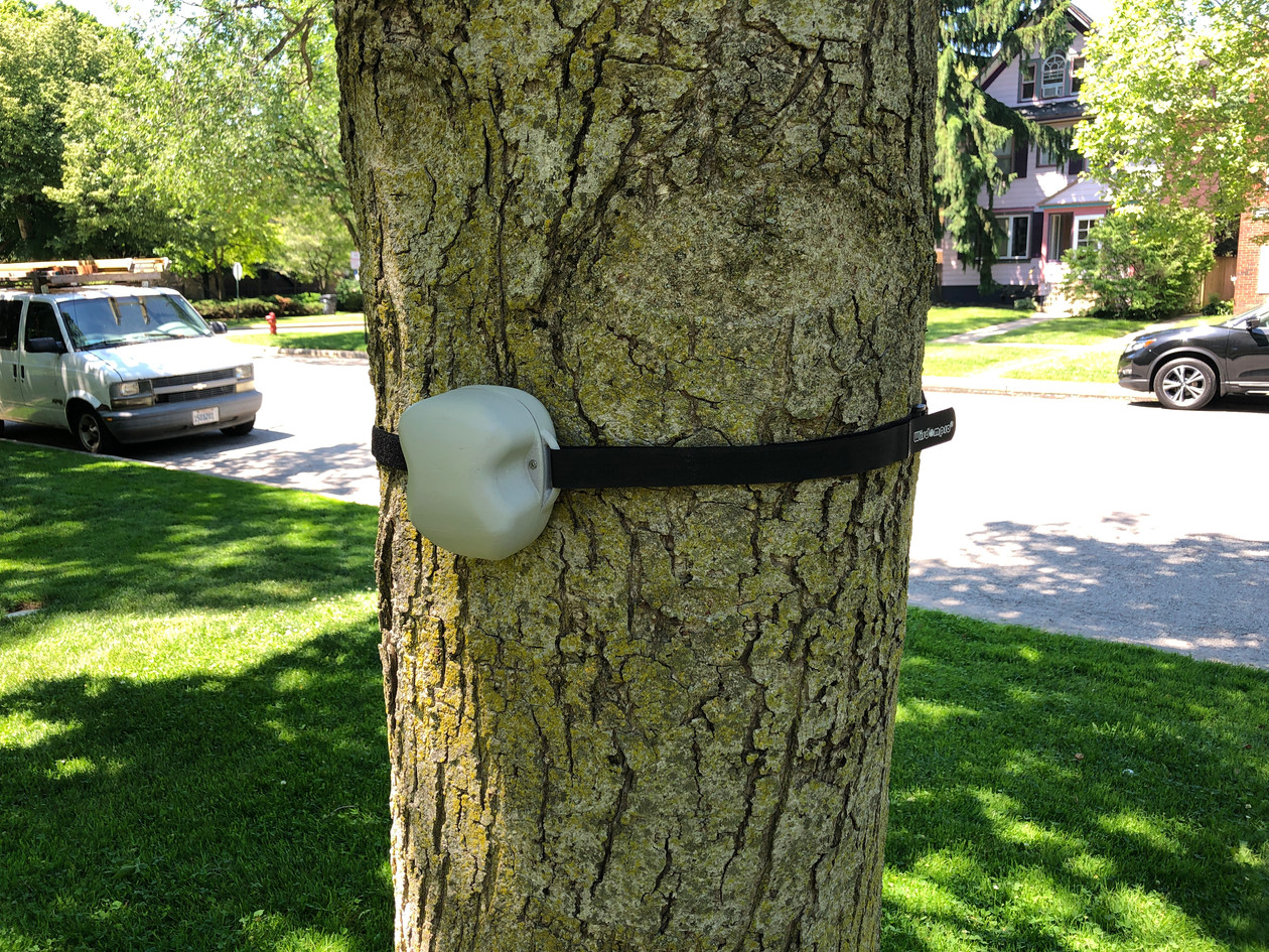 Sensor prototype on tree