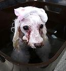 炭酸泉、犬の炭酸泉入浴