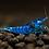 Thumbnail: Blue Velvet Shrimp 1 und.
