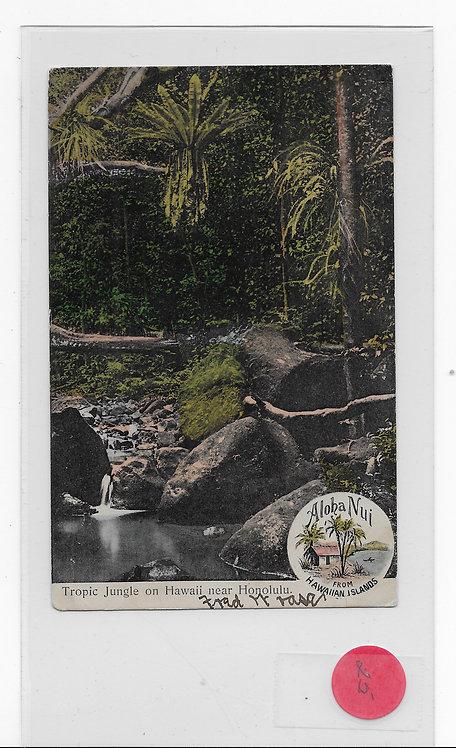 Tropical Jungle near Honolulu