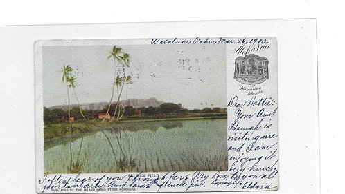 Rice Field Post Card