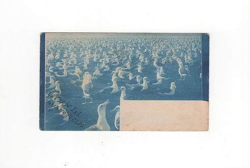 "CA134* Rare ""Blue Wash"" Card"
