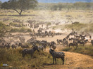 safarikids-pics-setting-africa4.jpg